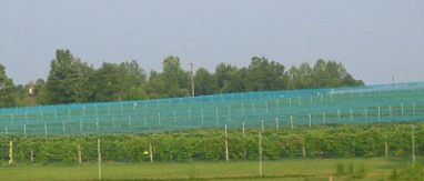 SMART-NET SYSTEMS AGRICULTURAL NETTING - Iron Gate Vineyards